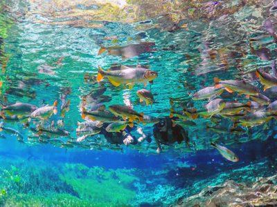 MuitoBonito-Galeria-Aquario_Natural2